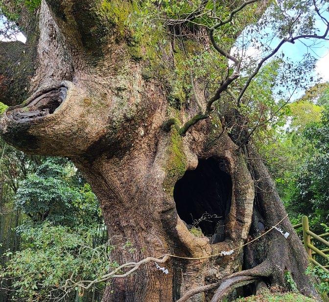 大隅半島の自然